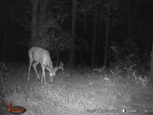 8-20-2019 Trail Cam Image of one Deer