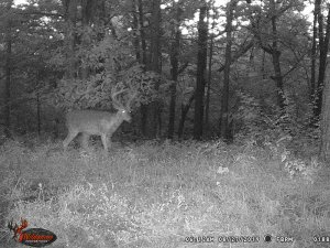 8-27-2019 Blurry Trail Cam Image of white tail Deer