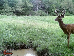 8-31-2019 Trail Cam Image of Deer