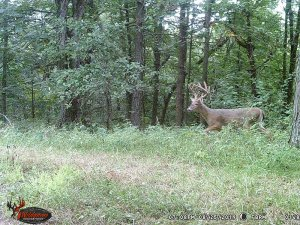 8-25-2019 Trail Cam Image of one Deer broad side