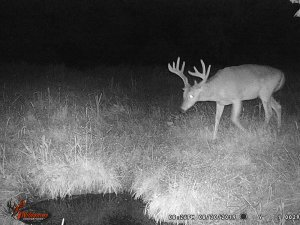 8-30-2019 Trail Cam Image of one Deer