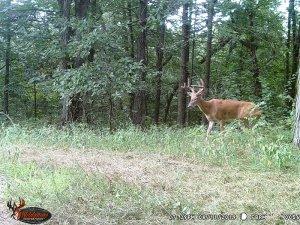 8-11-2019 Trail Cam Image of one Deer broad side