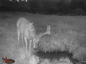 8-22-2019 Trail Cam Image of Deer