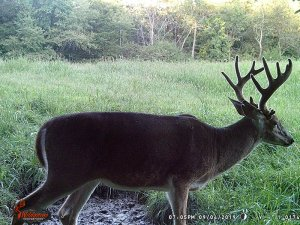 9-4-2019 Trail Cam Image of Deer