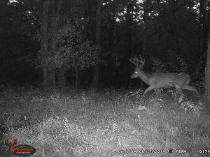8-27-2019 Trail Cam Image of Deer