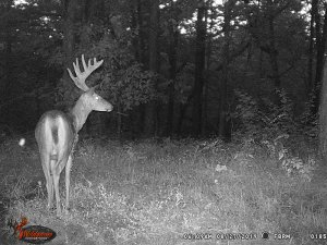 8-27-2019 Trail Cam Image of one Deer