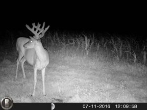 7-11-2016 Trail Cam Image of Deer Looking Left