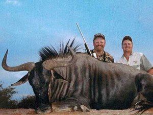 Two rifle hunters with harvested Blue Wildebeest