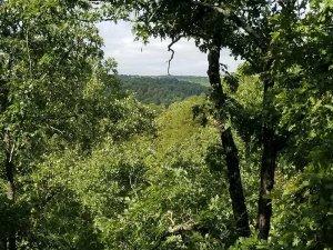 forest view vegetation