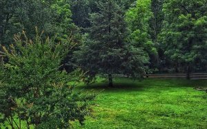 A green lawn in a forest clearing