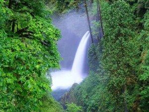 Small waterfall behind greenery
