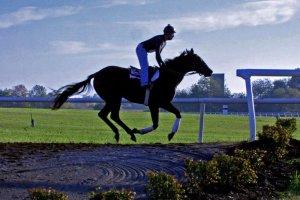 jockey galloping with horse