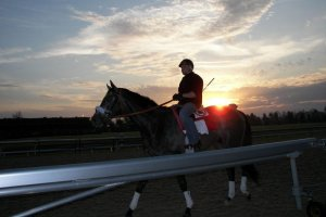 horserider on track at sunset