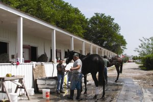 washing horse outside stall