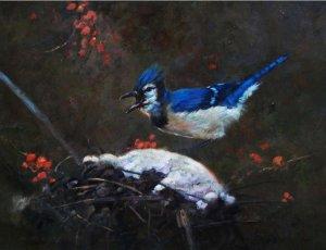 bluejay preparing snowy nest