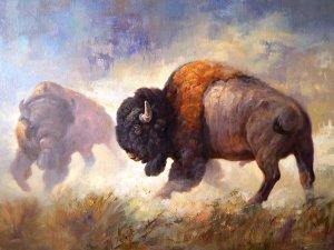 bison facing off