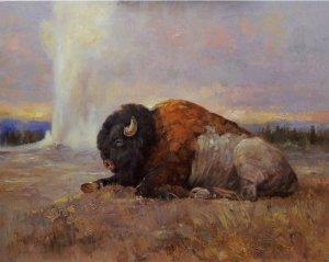 bison lying beside geyser