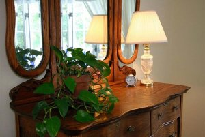 Plant on a dresser with mirror