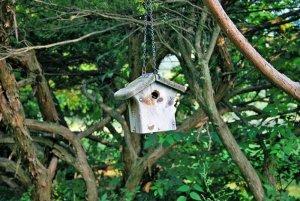small birdhouse in a tree