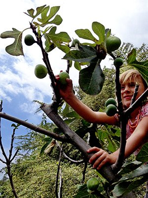 girl picking fruit at Kona Hawaii Guest House in Kona, Hawaii