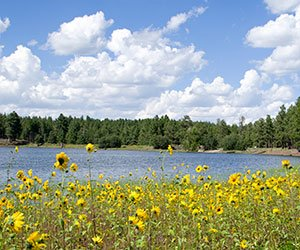 Dogtown Lake in the Kaibab National Forest