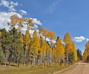 Kaibab National Forest in Autumn