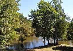 Choctaw National Wildlife Refuge near Womack Hill, AL 1