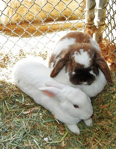 Bunnies at Pine Knot Guest Ranch