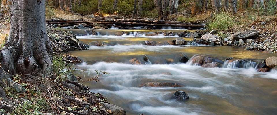 Things to Do in Lake Arrowhead, California | Arrowhead Tree Top Lodge