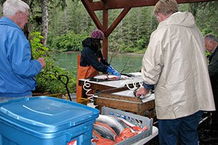 Fish cleaning at Bears Den Cabins in Cordova, AK