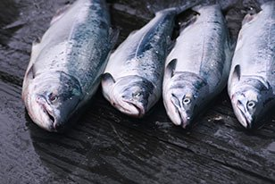 Salmon fishing near Bears Den Cabins in Cordova, AK