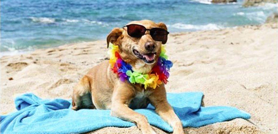Beach Dog near White Water Inn in Cambria, CA