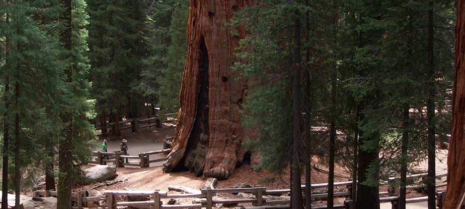Image result for sequoia national forest