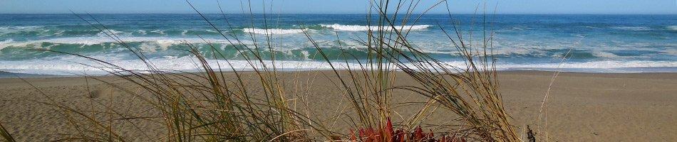 Point Reyes National Seashore near Osprey Peak Bed and Breakfast in CA