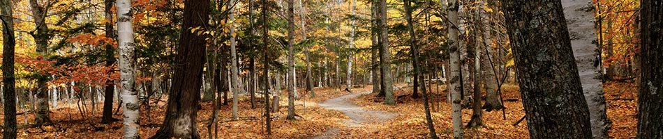 Woods near Country Pleasures B&B in Cashton, WI