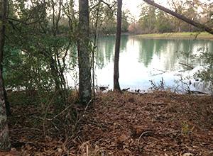 Magnolia Forest RV Park | 30427 Nichols Sawmill Rd. Magnolia, TX 77355 |  281-259-9700 | stay@magnoliaforestrvpark.com