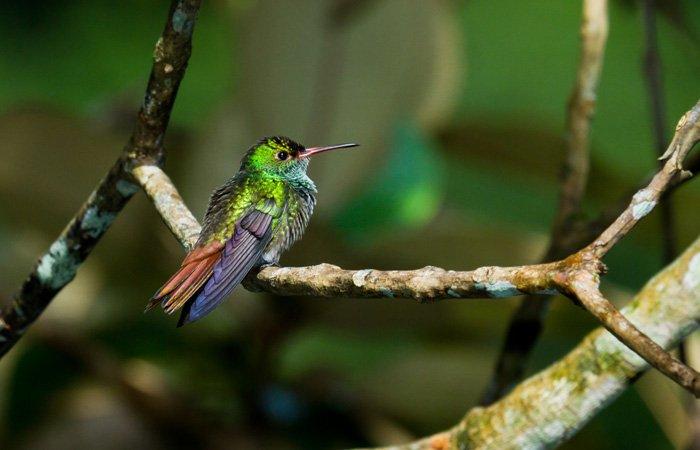hummingbird at copperbank inn