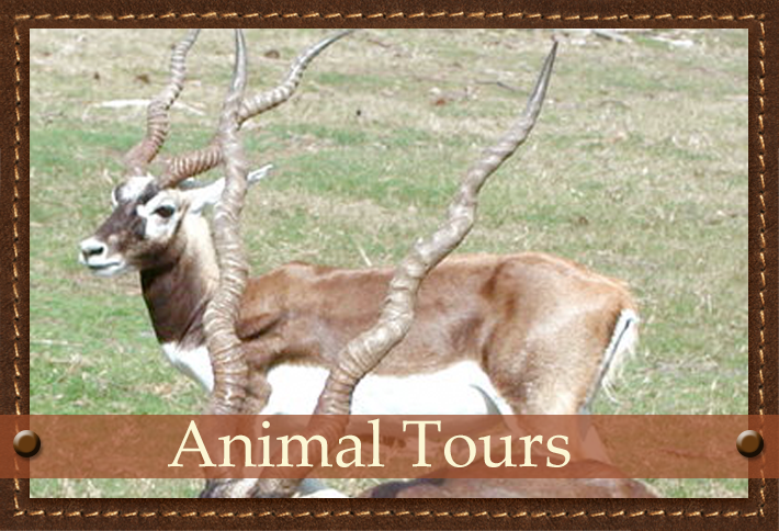 Exotic Animal Tour at Glory Hills Ranch in Pipe Creek, TX