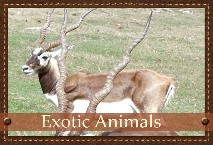 Exotic Animals at Glory Hills Ranch in Pipe Creek, TX