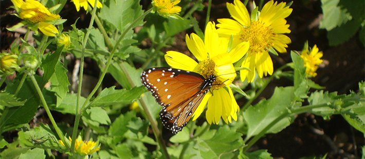 butterfly at glory hills bed and breakfast