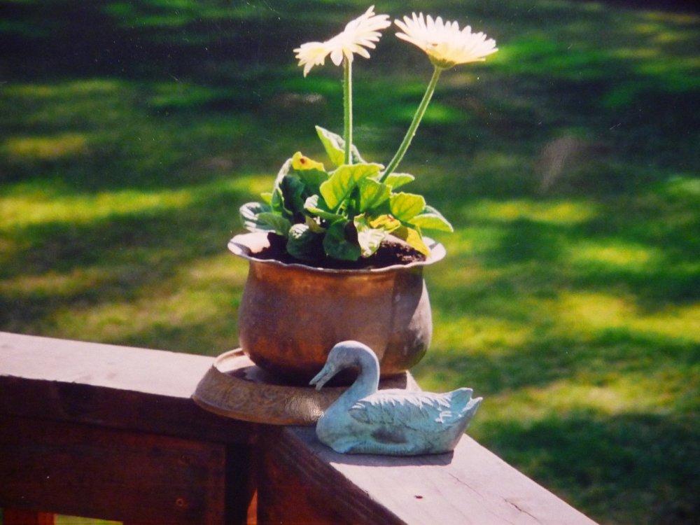 flower pot on deck railing