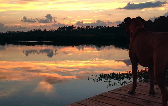 dog and sunset near Bayou Haven