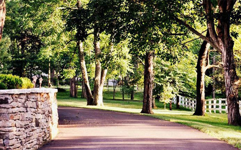A tree-lined driveway