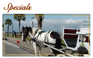 A horse and buggy near palm trees