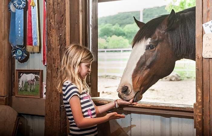 baby feeding horse at Country Woods Inn in Glen Rose TX