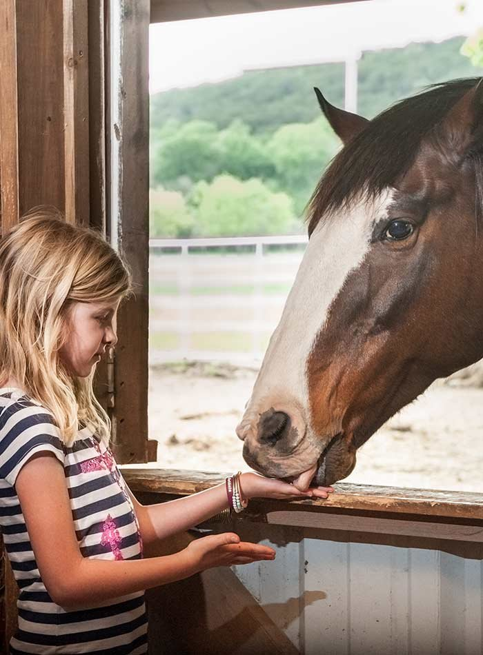 Girl feeding horse at Country Woods Inn in Glen Rose TX