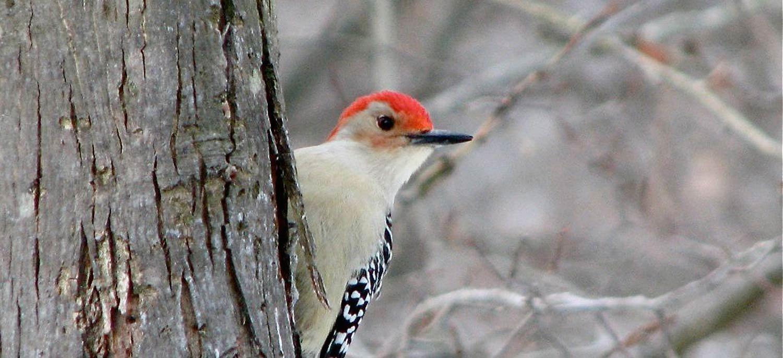 songbird prairie bed u0026 breakfast of valparaiso indiana