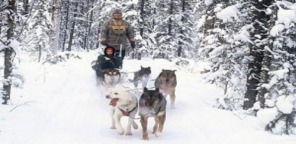 Dog Sledding & Aurora