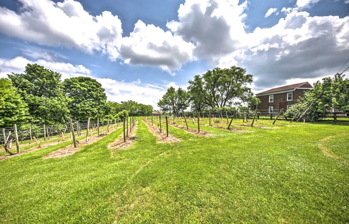 Springhill Winery plantation and Bed and Breakfast in Bloomfield, Kentucky