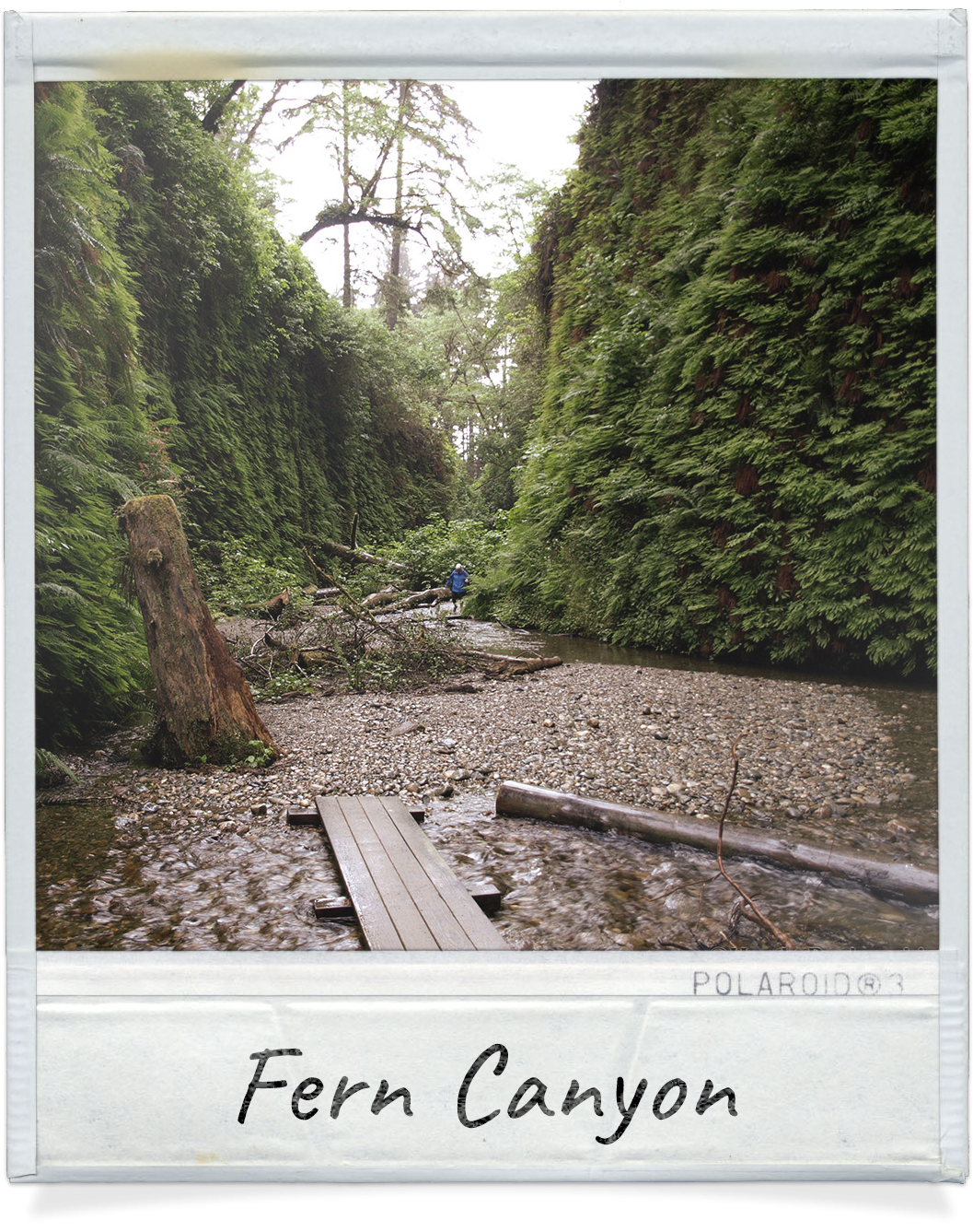 Fern Canyon near Redwood Meadows in Crescent City, CA